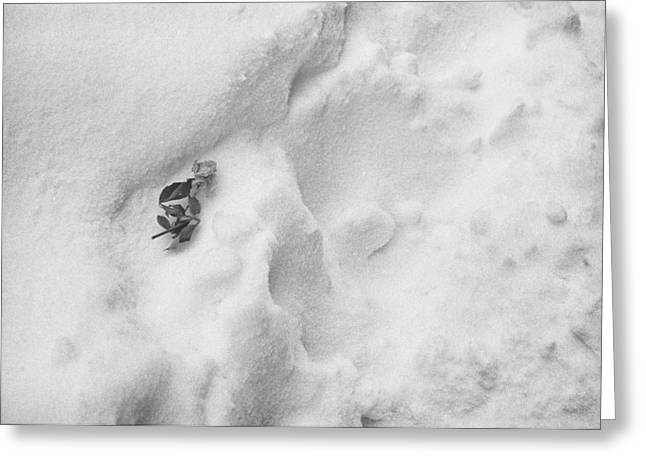 Greeting Card featuring the photograph Rose In The Snow by Dave Beckerman