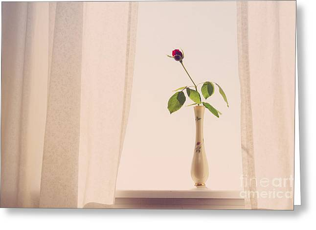 Rose In The Window Greeting Card