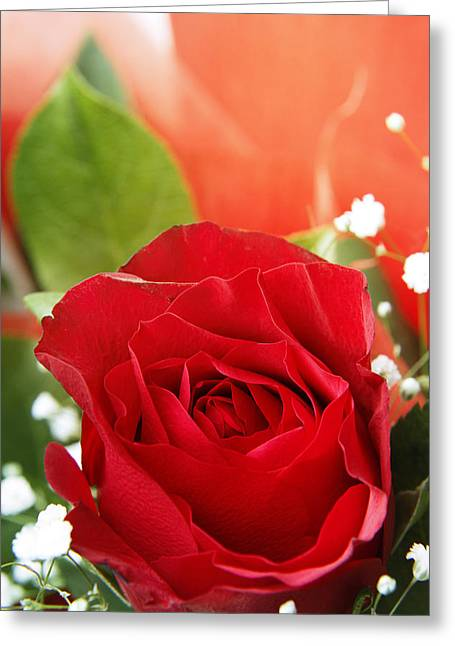Rose Greeting Card by Les Cunliffe