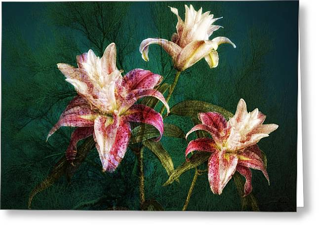 Greeting Card featuring the photograph Rose Lily Number Three by Bob Coates
