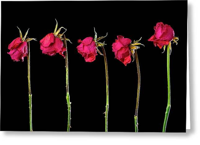 Rose Lineup Greeting Card by Mauro Celotti