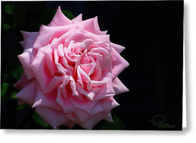 Rose Greeting Card by Ludwig Keck