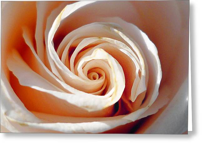 Rose Magnificent Spiral  Greeting Card by Irina Sztukowski