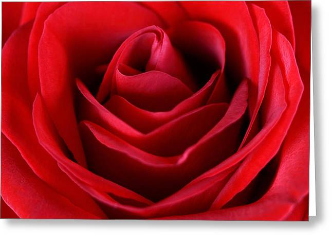 Rose  Greeting Card by Mark Ashkenazi