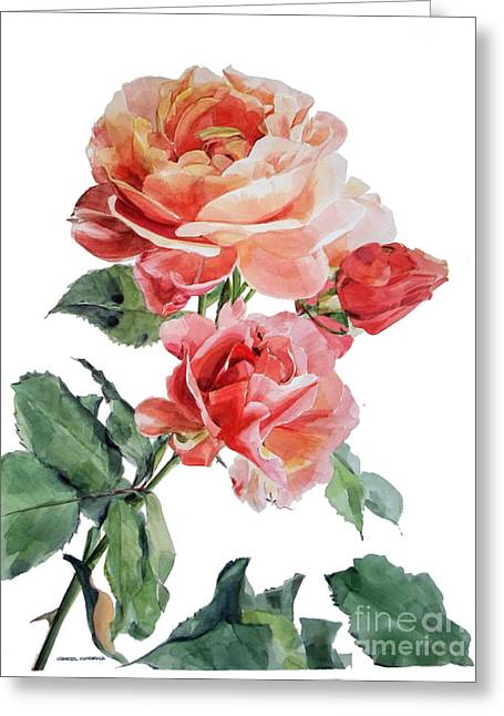 Watercolor Of Red Roses On A Stem I Call Rose Maurice Corens Greeting Card
