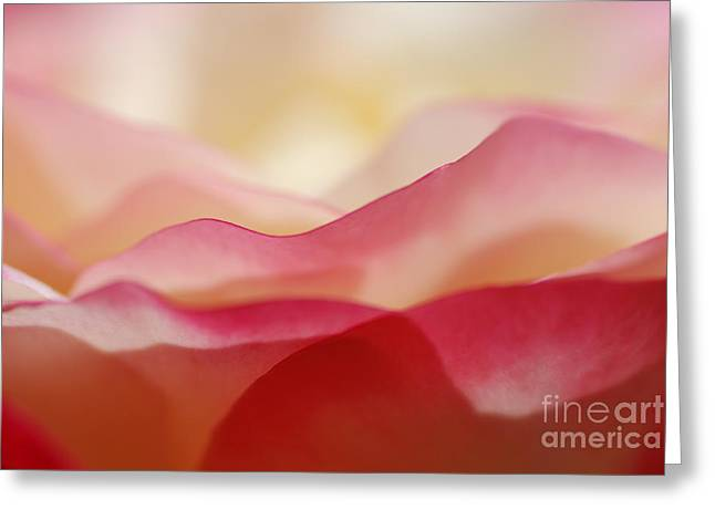Rose Mountain Greeting Card