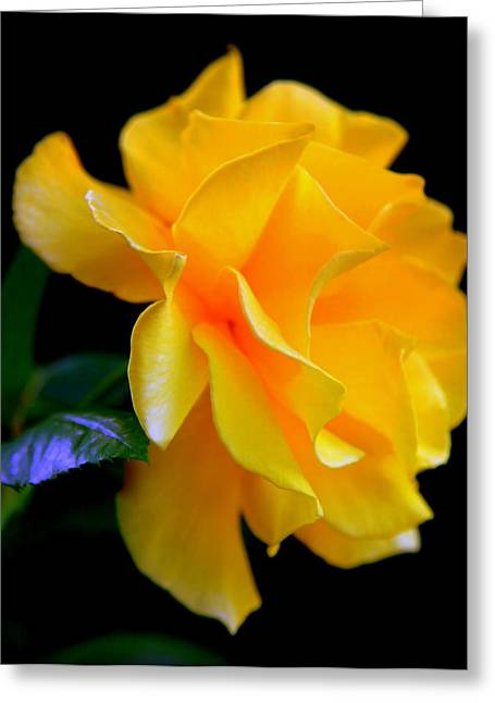 Rose Of Cleopatra Greeting Card by Karen Wiles