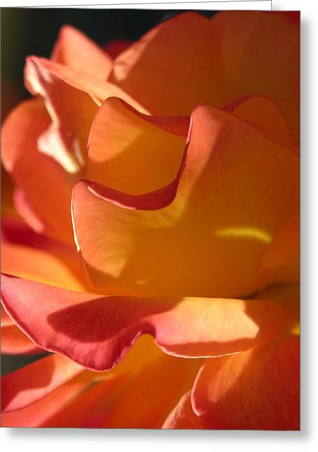 Rose Of Light Greeting Card by Lucy Howard