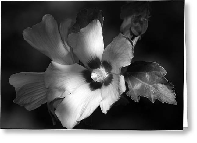 Rose Of Sharon Greeting Card by Donna Kennedy