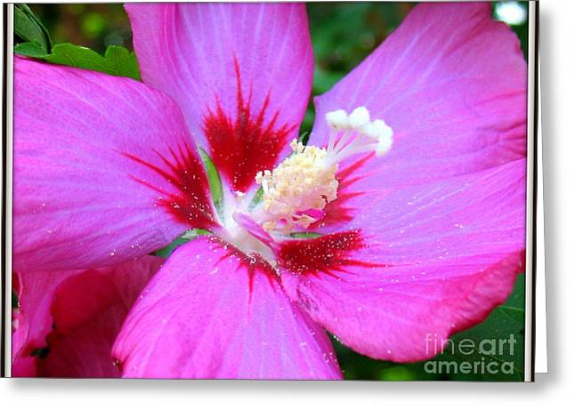 Rose Of Sharon Hibiscus Greeting Card by Patti Whitten