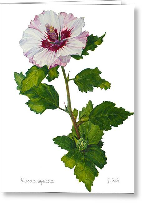 Rose Of Sharon - Hibiscus Syriacus Greeting Card by Janet  Zeh