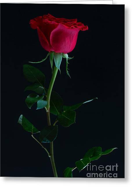 Rose On Black Greeting Card by Svitlana Imnadze