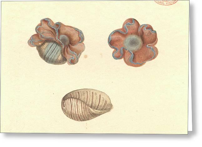 Rose-petal Bubble Shell Greeting Card