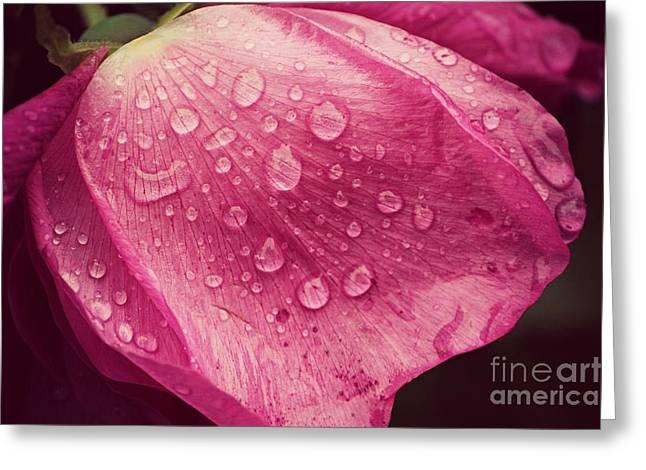 Rose Petal Raindrops  Greeting Card by Lauren Maki