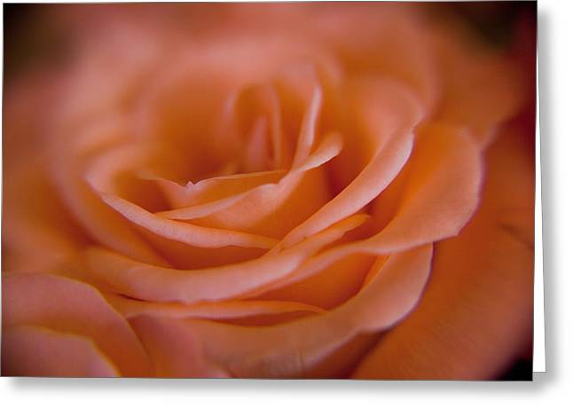 Rose Petals Greeting Card by Kim Lagerhem