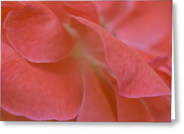 Greeting Card featuring the photograph Rose Petals by Stephen Anderson