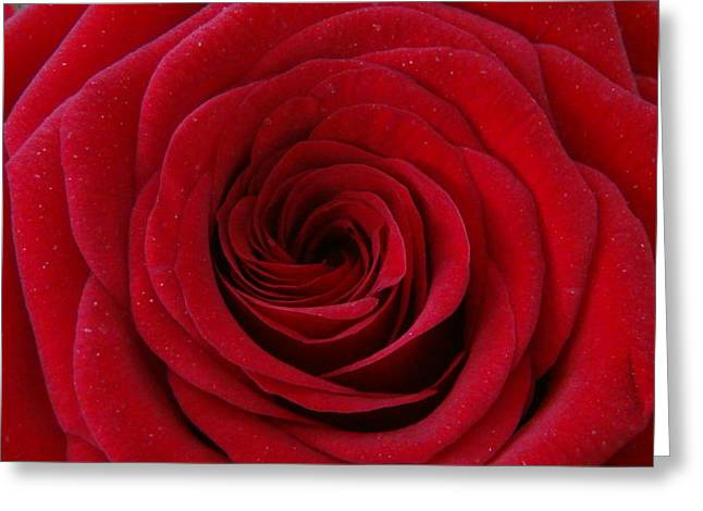 Greeting Card featuring the photograph Rose Red by Shawn Marlow