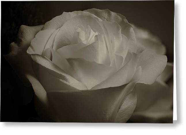 Rose Shadow And Light Greeting Card