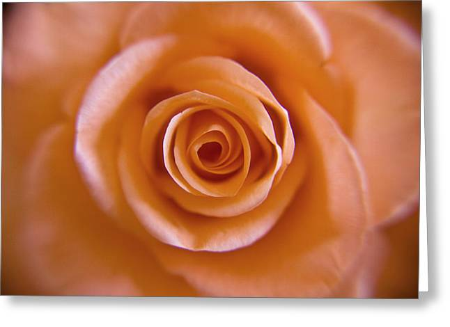 Rose Spiral 2 Greeting Card by Kim Lagerhem