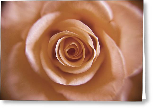 Rose Spiral 3 Greeting Card by Kim Lagerhem