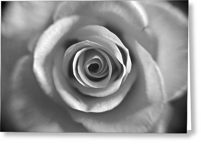Rose Spiral 4 Greeting Card by Kim Lagerhem