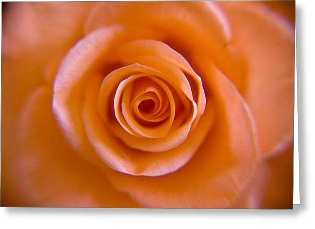 Rose Spiral Greeting Card by Kim Lagerhem