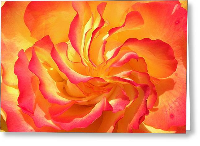 Rose Swirl Greeting Card by Brian Chase