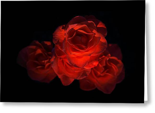 Greeting Card featuring the photograph Rose Three by David Andersen