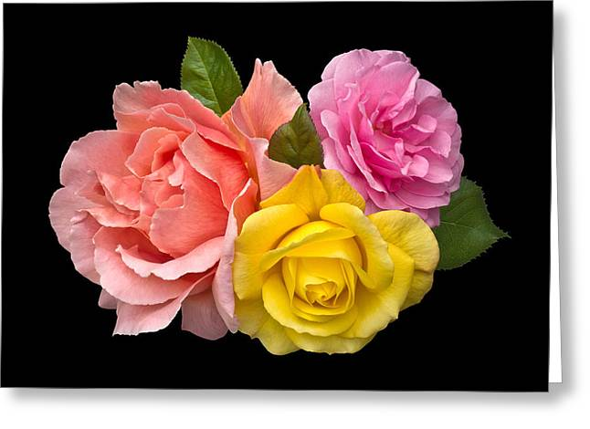 Rose Trilogy Greeting Card by Jane McIlroy