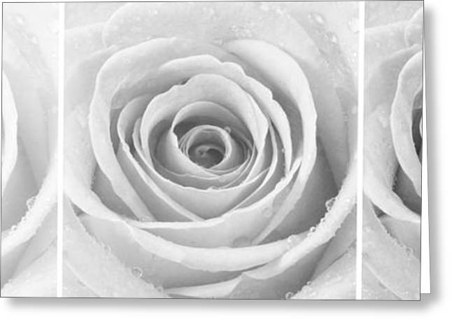 Rose Trio - Black And White Greeting Card by Natalie Kinnear