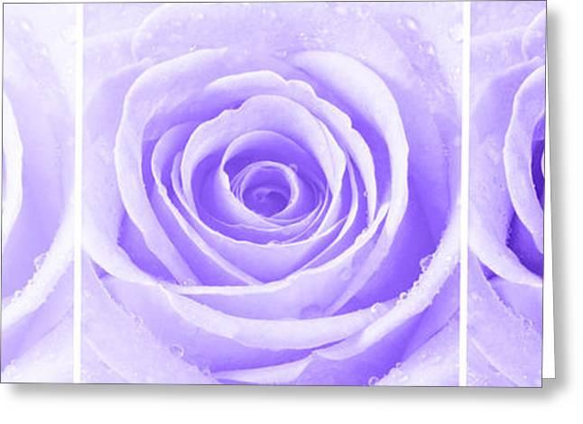 Rose Trio - Purple Greeting Card by Natalie Kinnear