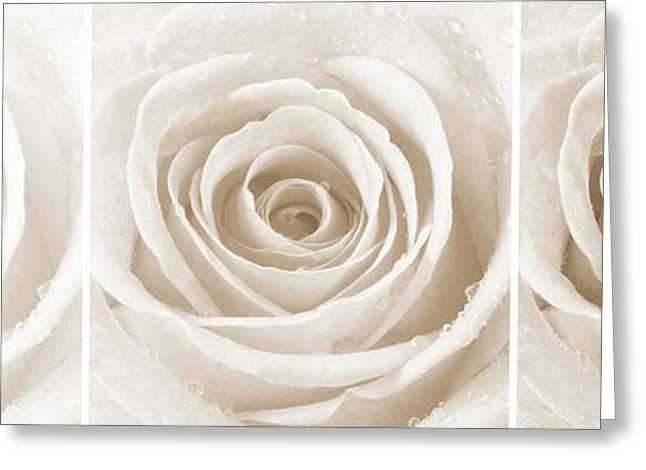 Rose Trio - Sepia Greeting Card by Natalie Kinnear