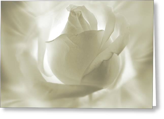 Rose With Glow Greeting Card