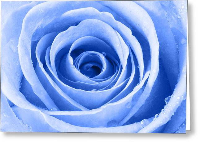 Rose With Water Droplets - Blue Greeting Card by Natalie Kinnear