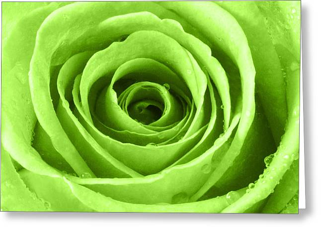 Rose With Water Droplets - Lime Green Greeting Card by Natalie Kinnear