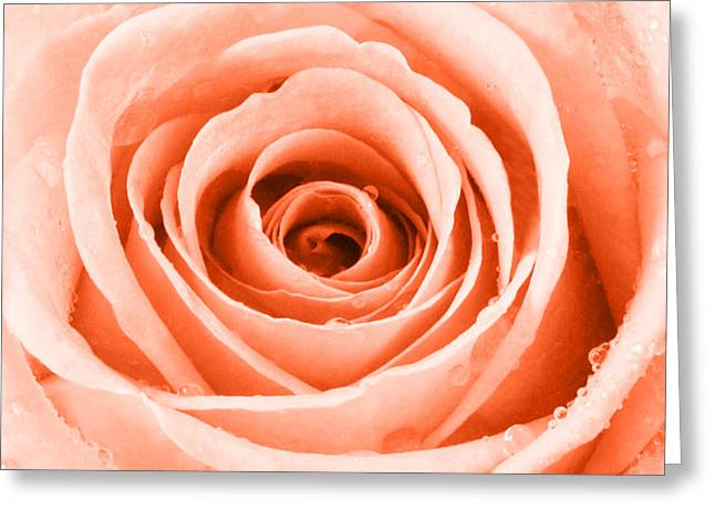 Rose With Water Droplets - Orange Greeting Card by Natalie Kinnear