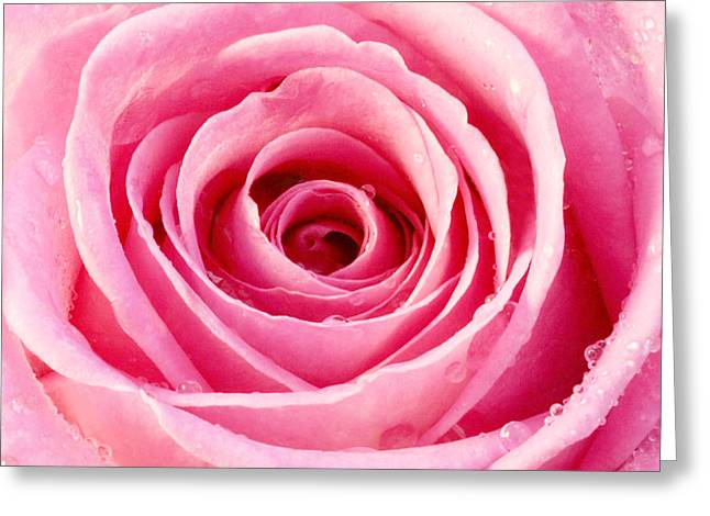Rose With Water Droplets - Pink Greeting Card by Natalie Kinnear