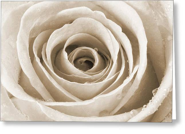 Rose With Water Droplets - Sepia Greeting Card by Natalie Kinnear