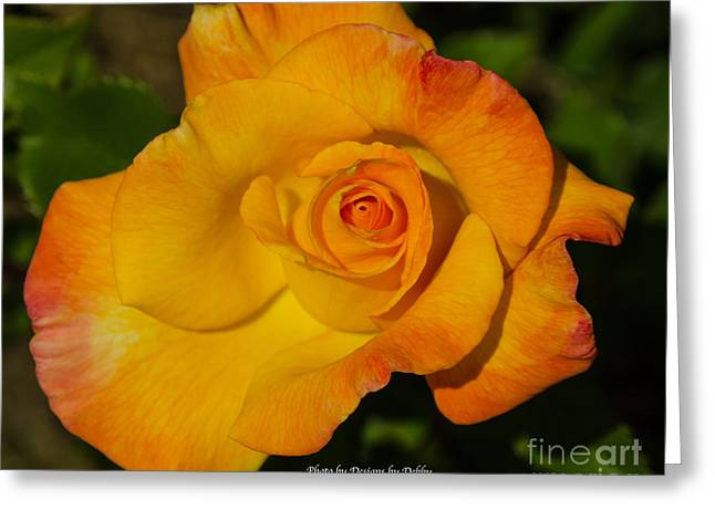 Greeting Card featuring the photograph Rose Yellow Red by Debby Pueschel