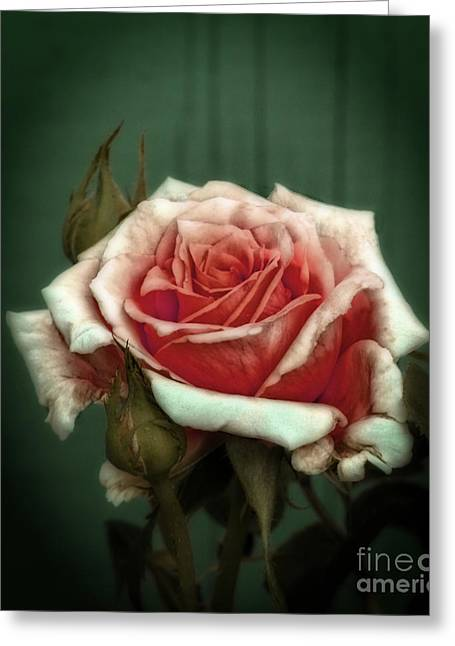 Greeting Card featuring the photograph Rose20122 by Marjorie Imbeau