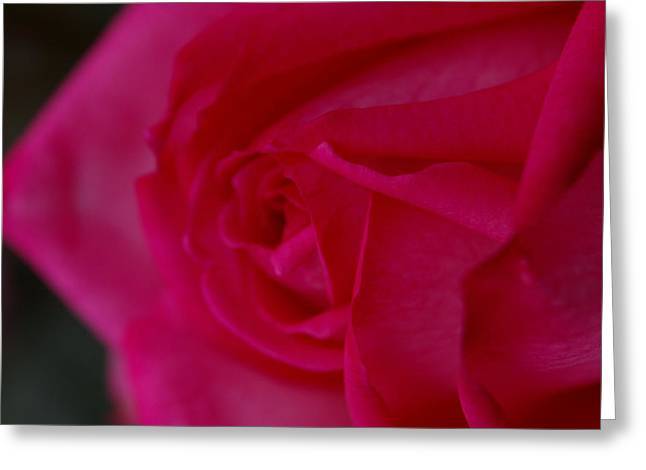 Rose6 Greeting Card by Kennith Mccoy