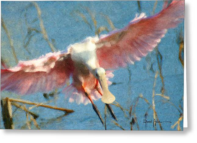Da203 Roseate Spoonbill By Daniel Adams Greeting Card