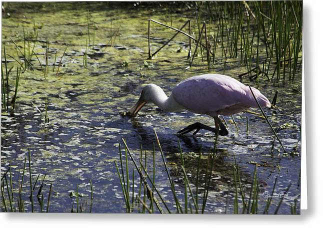 Roseate Spoonbill Ix Greeting Card