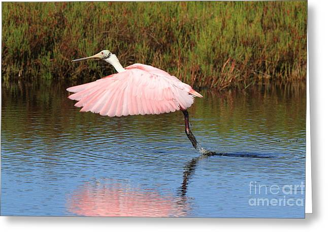 Greeting Card featuring the photograph Roseate Spoonbill  by Jennifer Zelik