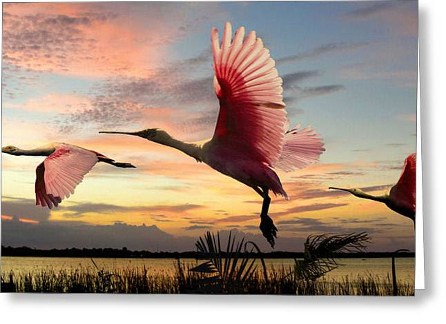 Roseate Spoonbills Of Lake Tarpon Greeting Card by M Spadecaller