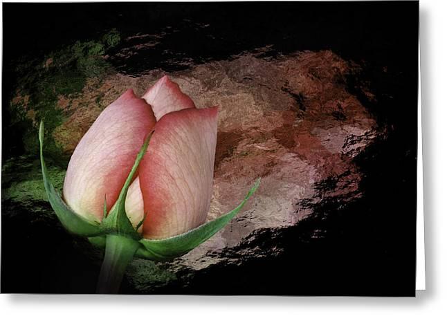 Rosebud Greeting Card by Cyndy Doty
