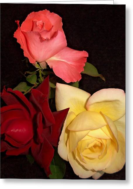 Roses 1 Greeting Card