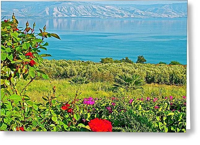 Roses And Sea Of Galilee Near Church Of The Beatitudes In Tabgha-israel   Greeting Card