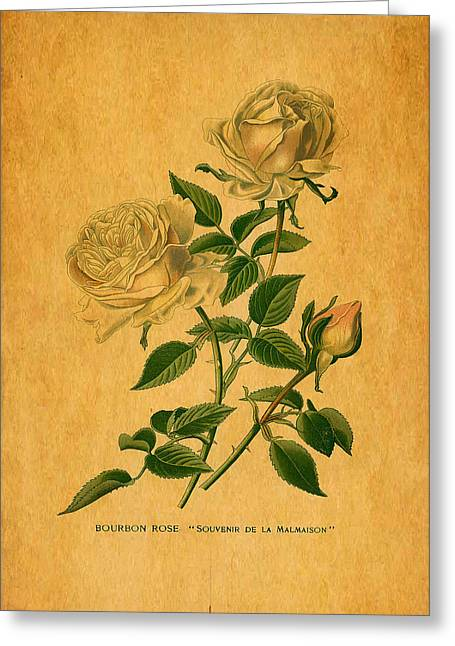 Roses Are Golden Greeting Card by Sarah Vernon
