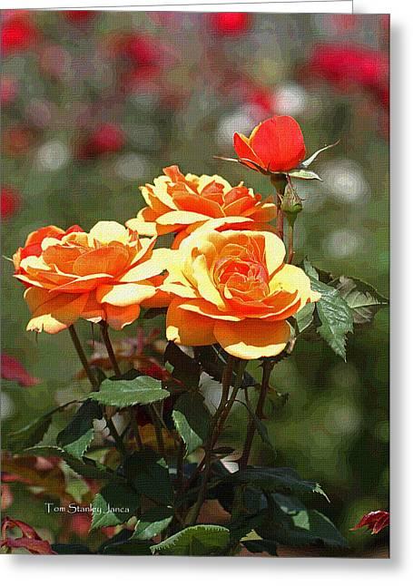 Roses At Mcc Greeting Card by Tom Janca